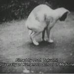 بیماری هولناک گربه رقصان