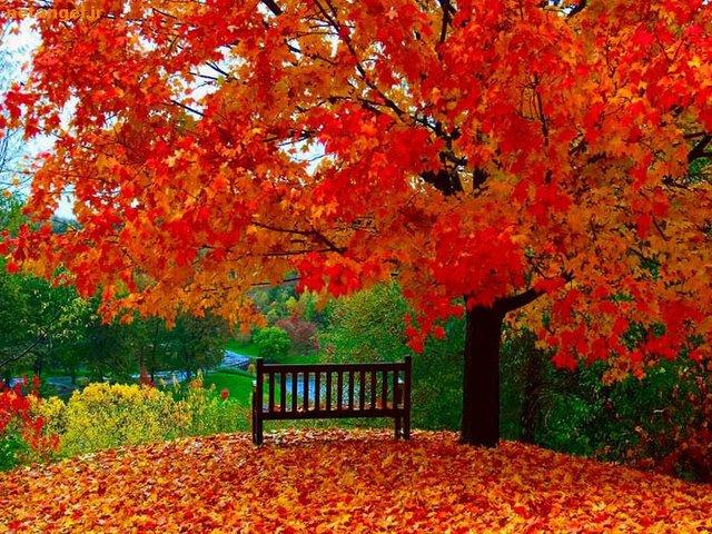پاییز از زوال تا زایش